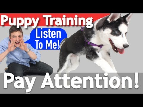 How to Teach your Puppy to Listen When they Won't!