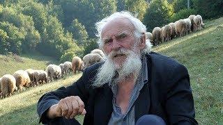 Najstariji ovčar u BiH treba traktor