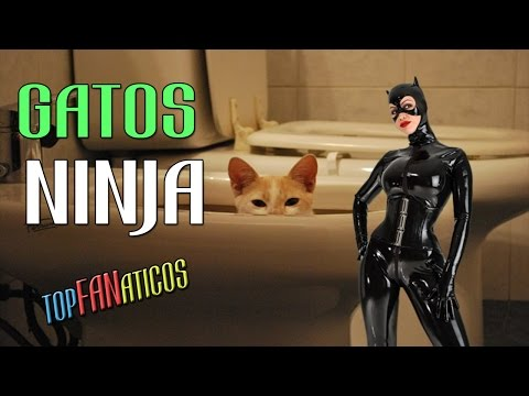 Gatos Ninjas Y Algo Locos!!   Parkour Ninja Cats