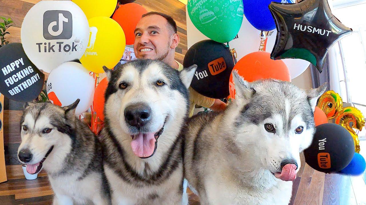 Собаки и 1000 суши роллов / ВЛОГ: День Рождения HUSMUT Мишани