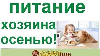 Питание хозяина собаки в осеннее время  мой опыт