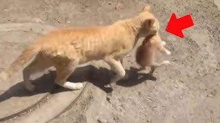 Katzenvideos - Katzenmamas tragen süße Katzenbabys - Die lustigsten Katzen der Welt
