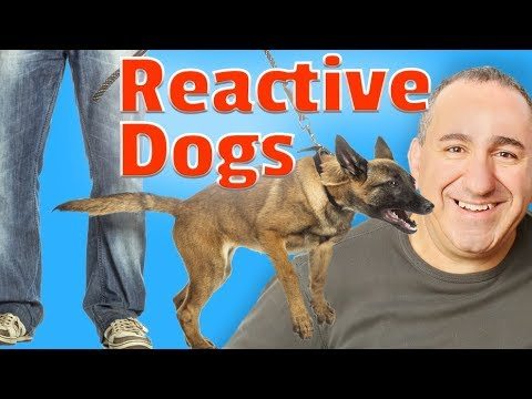 WOW! My Puppy Learned So Much In 2 Months. You can too! from YouTube · Duration:  6 minutes 36 seconds