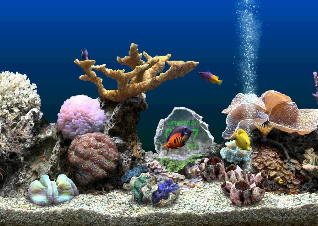 Serenescreen marine aquarium 3d youtube for Marina aquarium