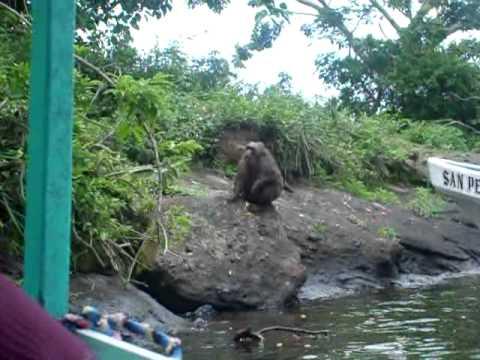 isla de los monos en catemaco veracruz youtube