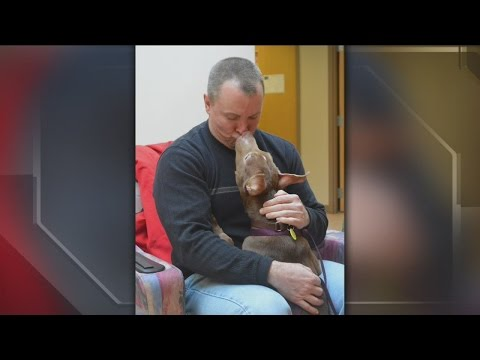 Milwaukee detective adopts puppy he helped rescue from abusive home