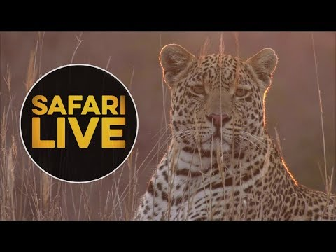 safariLIVE -  Sunset Safari - August 16, 2018
