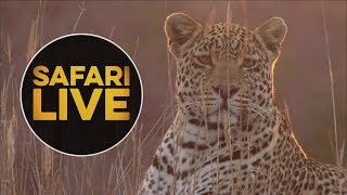 safariLIVE -  Sunset Safari - August 16, 2018 thumbnail