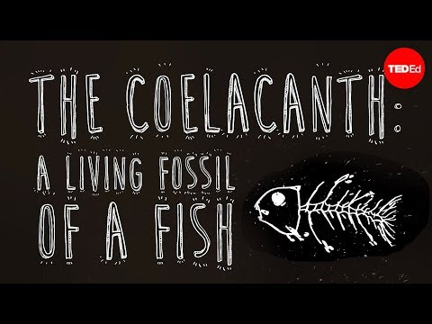 Video image: The coelacanth: A living fossil of a fish - Erin Eastwood