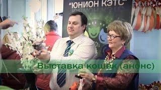 Выставка кошек в Минске (12-13 марта)