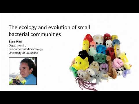 Sara Mitri: The ecology and evolution of small bacterial communities