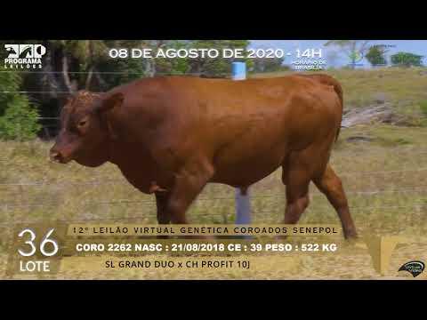 LOTE 36 CORO 2262