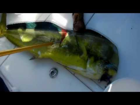 Cozumel Deep Sea Fishing With Cozumel Concierge