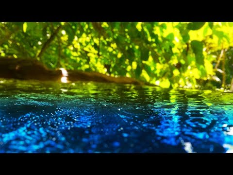 Peaceful Stream Sounds 10 Hours   Sleep, Study, Focus   Water White Noise