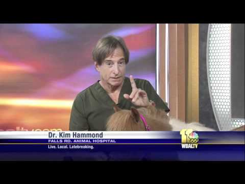 Pet Q&A: Vitamin Petroleum Supplements and Post-Surgery Pain Medication