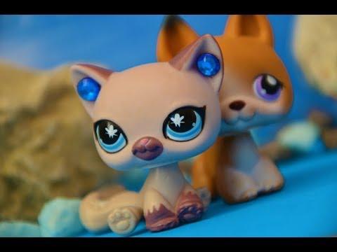 Littlest Pet Shop: Návrat krále (Chloe&Josh)