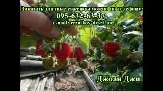 видео Купить саженцы малины в Украине