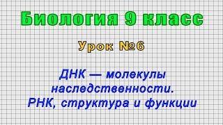 Биология 9 класс (Урок№6 - ДНК — молекулы наследственности. РНК, структура и функции.)
