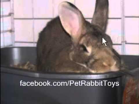 Bunny New Zealand White Mix ?  Rabbit Types Series