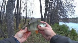 Клюет на каждом забросе Рыбалка для души Окунь на отводной