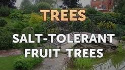Salt-Tolerant Fruit Trees