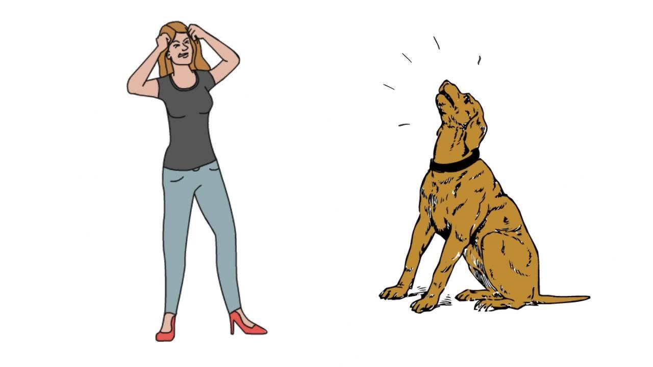 dog barking whistle