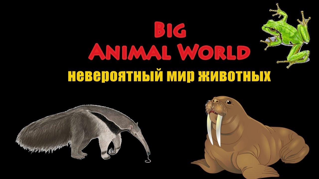 невероятный мир животных от big animal world