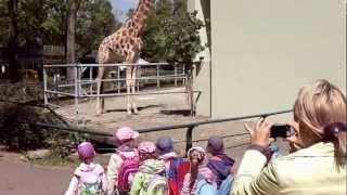 Samotna i smutna żyrafa - Zoo w Łodzi