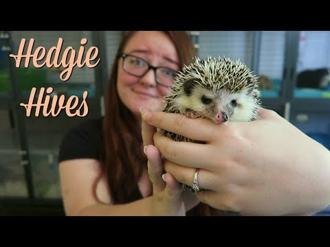 Am I Allergic to My Hedgehog?! || Hedgie Hives