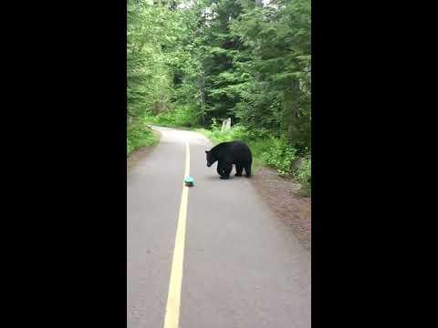 BEAR ENCOUNTER CANADA - SKATEBOARDER GETS FAR TOO CLOSE