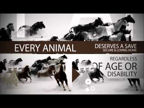 ISF Animal Sanctuary - Let's make it happen