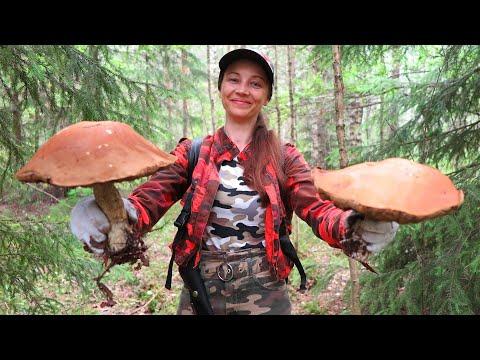 Как гриб подосиновик получил свое название и как он может прокормить вас зимой