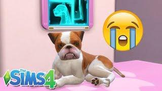 ABBY PASSOU MAL E FOI INTERNADA #47 - Os Sobreviventes - The Sims 4 - JR E MI