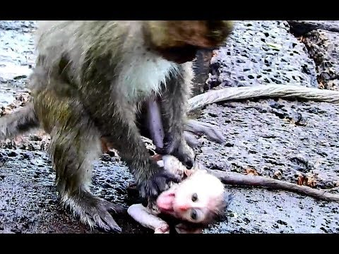 Wow,Very painful for Baby Brutus Jr , Why DeeDee ride & strangle on Baby Brutus Jr supper seriously?