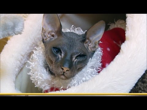 Merriest, Dryest Christmas Ever | My Cat From Hell