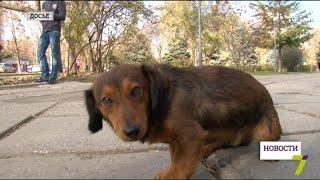 В Одессе волонтеры пересчитают бездомных собак