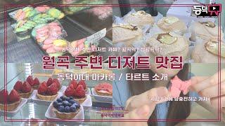 [동덕TV] 월곡 주변 디저트 맛집  | 동덕여대 디저…