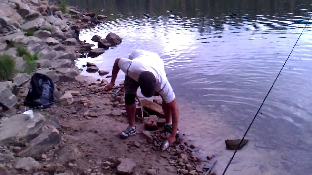 James catches a big trout at bear canyon lake az youtube for Big lake az fishing report