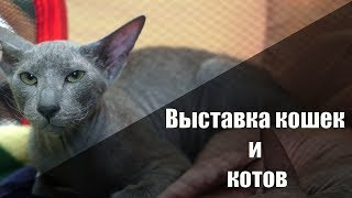 Выставка котов и кошек в городе Томске