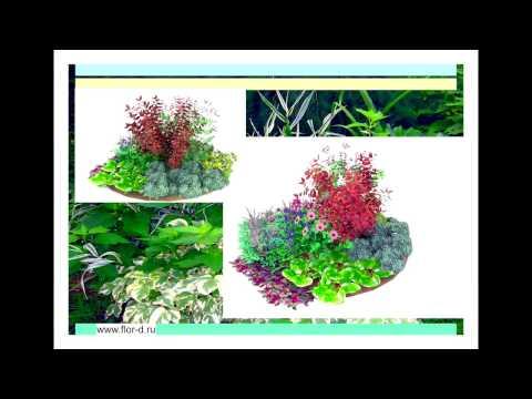 Схемы клумб из многолетников с ассортиментной ведомостью. Для садов с малым уходом. Моя работа.