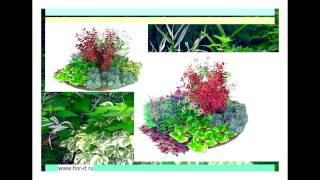 видео Миксбордер своими руками – готовые схемы из многолетников, хвойных и кустарников – план с фото