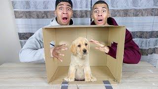 WAS IST IN DER BOX CHALLENGE EXTREM 3 !!! (LEBENDE TIERE) | PrankBrosTV