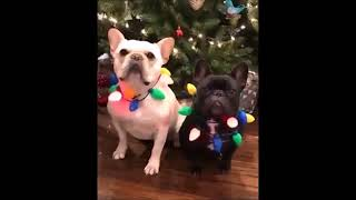 Funny Cats And Dogs Compilation part 3 Let's LOOOL