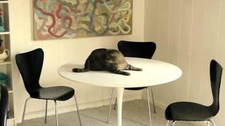 Saarinen Tulip Table & Maggie The Cat