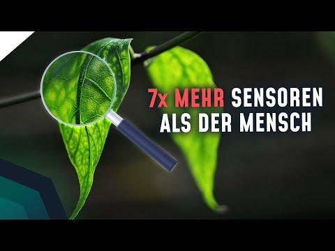 Pflanze spürt Schmerzen! Können Pflanzen fühlen? | Breaking Lab