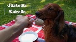 Koiralle Tarkoitettu Jäätelö (Helppo ja Nopea)