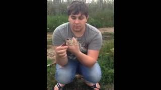 Рыбалочка в Киевка