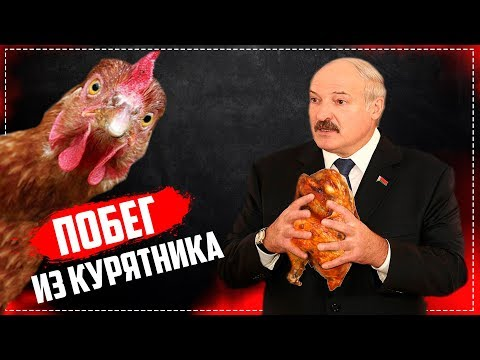 Смотреть Куда сбежали цыпочки? Шуневич разберись Беларуснефть-Особино/Общество Гомель онлайн