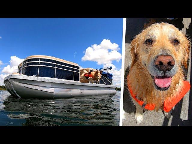 CUSTOM BOAT UPGRADE FOR DOGS! - Super Cooper Sunday #205