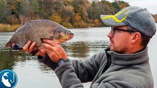 Ловля леща поздней осенью на реке Гауя. Золотая осенняя рыбалка на фидер